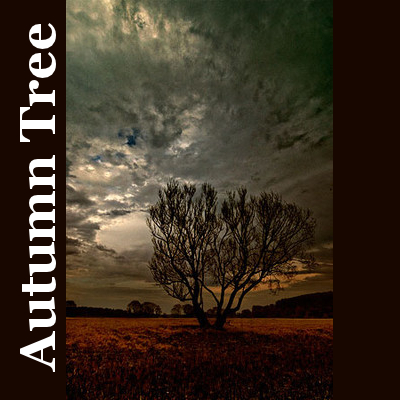 Autumn Tree - Collection